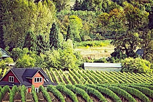 Wine Country Yacht Cruises - USA River Cruises