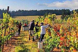 AniChe Cellars: Visit Craft Wine Making in WA
