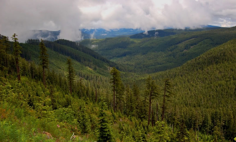View over Mount Hood National Forest
