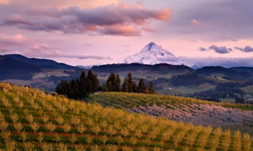 Mount Hood Tourism Orchard