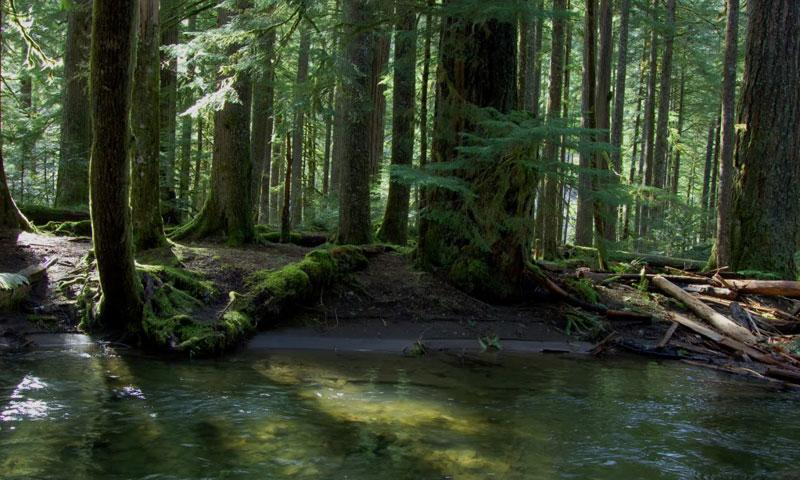 Mt Hood National Forest Oregon Alltrips