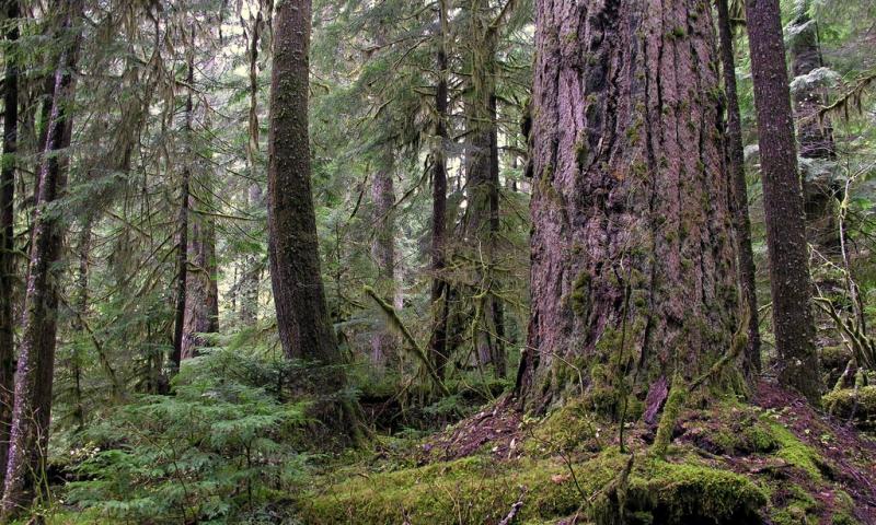 Trapper Creek Wilderness Washington Alltrips