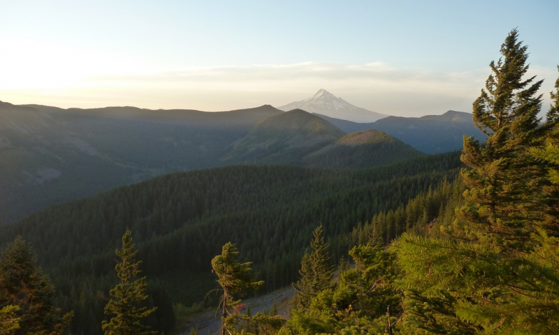 Mt Hood from the Pacific Crest Trail