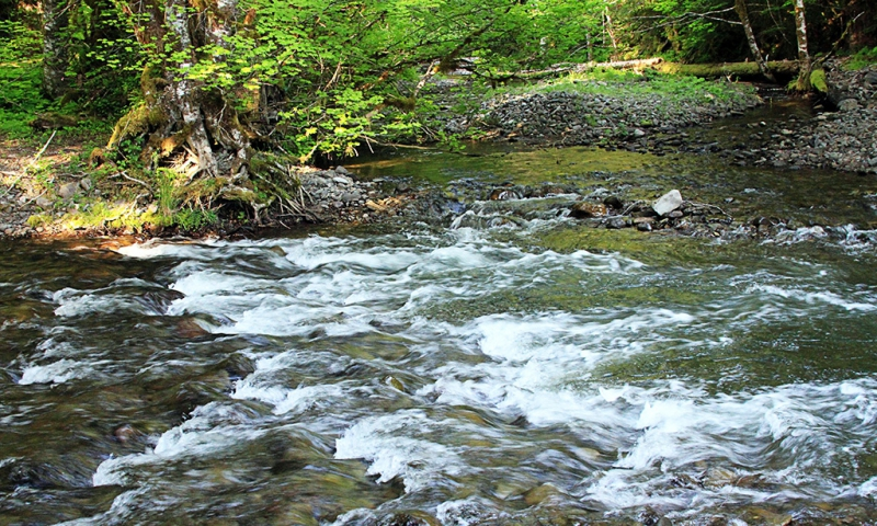 Wind River Oregon Fly Fishing Camping Boating Alltrips