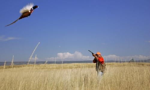 Mount Hood Hunting