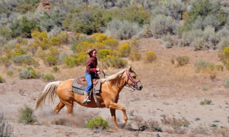 Mount Hood Oregon Horseback Riding