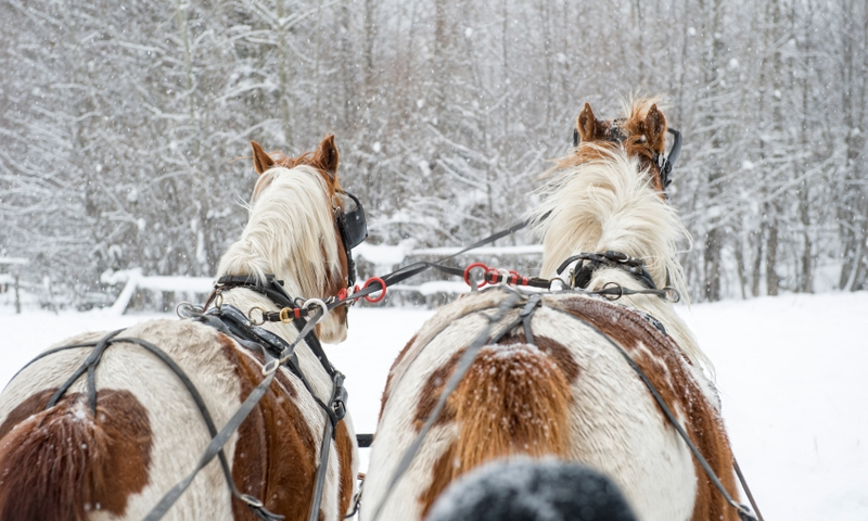 Mount Hood Oregon Sleigh Rides